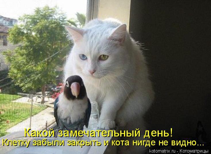 Котоматрица: Какой замечательный день!  Клетку забыли закрыть и кота нигде не видно...