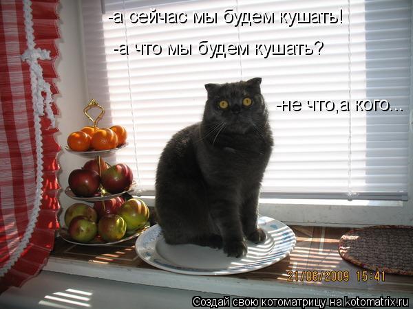 Котоматрица: -а сейчас мы будем кушать! -а что мы будем кушать? -не что,а кого...