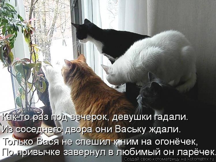 Котоматрица - Как-то раз под вечерок, девушки гадали. Из соседнего двора они Ваську
