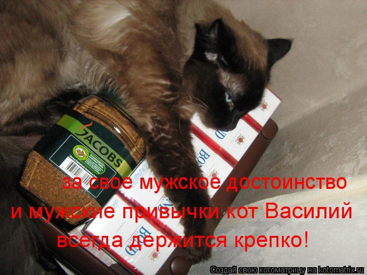 Котоматрица: за свое мужское достоинство  и мужские привычки кот Василий всегда держится крепко!