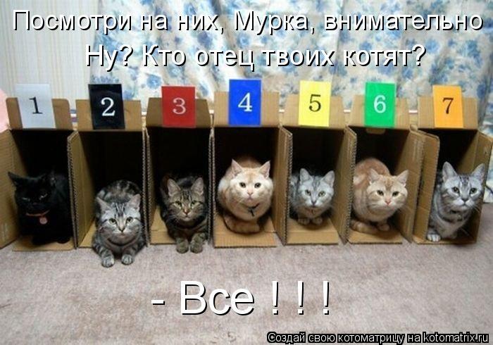 Котоматрица: Посмотри на них, Мурка, внимательно Ну? Кто отец твоих котят? - Все ! ! !