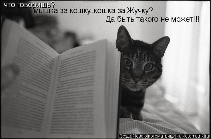 Котоматрица: что говоришь? мышка за кошку..кошка за Жучку? Да быть такого не может!!!!