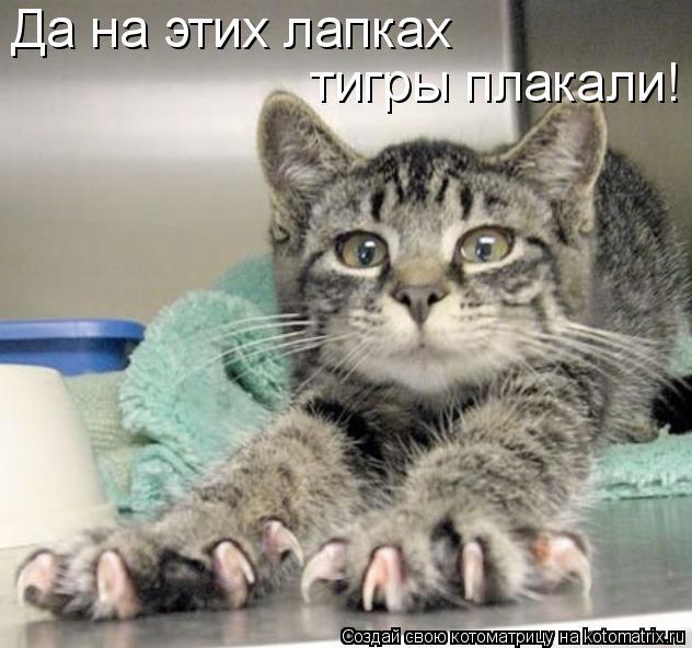 Котоматрица: Да на этих лапках тигры плакали!