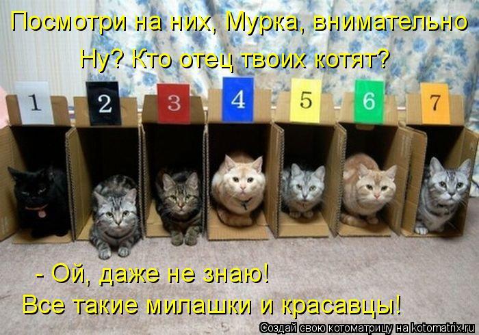 Котоматрица: Посмотри на них, Мурка, внимательно Ну? Кто отец твоих котят? - Ой, даже не знаю! Все такие милашки и красавцы!