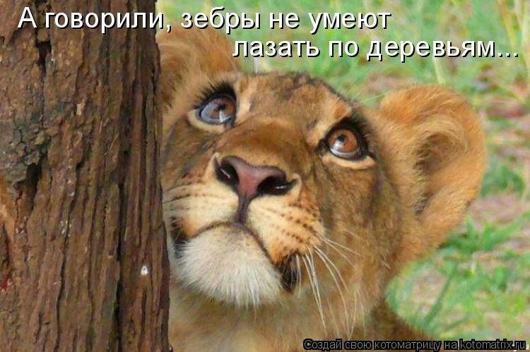 Котоматрица: А говорили, зебры не умеют лазать по деревьям...