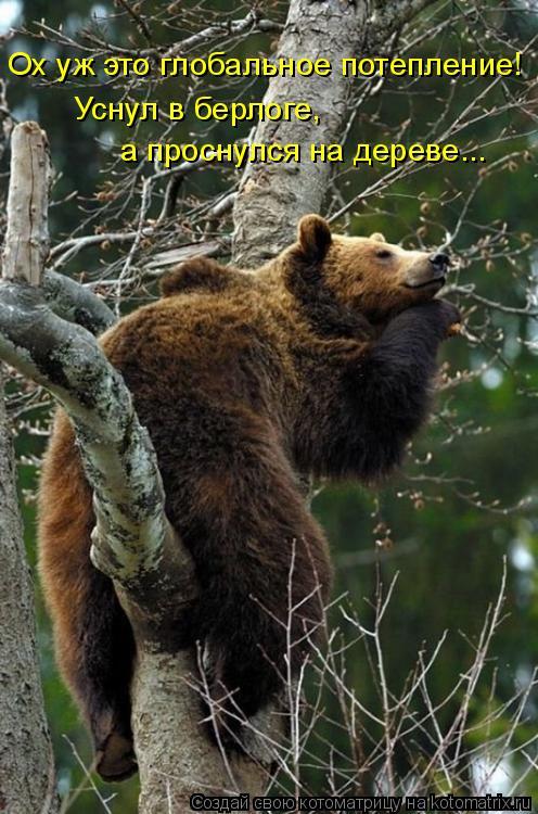 Котоматрица: Ох уж это глобальное потепление! Уснул в берлоге, а проснулся на дереве...