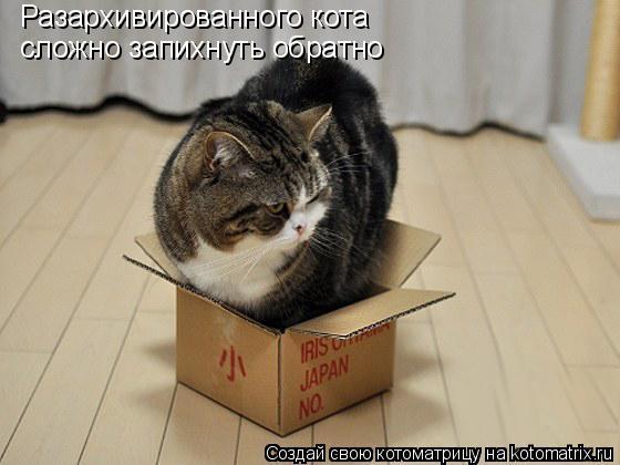 Котоматрица: Разархивированного кота сложно запихнуть обратно