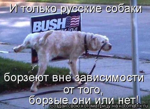 Котоматрица: И только русские собаки борзеют вне зависимости  борзые они или нет! от того,