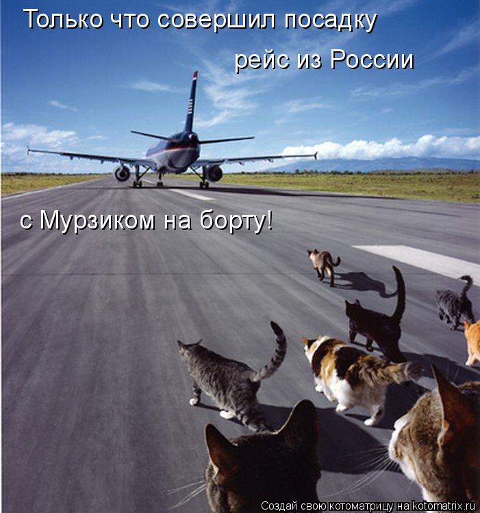 Котоматрица: Только что совершил посадку рейс из России с Мурзиком на борту!