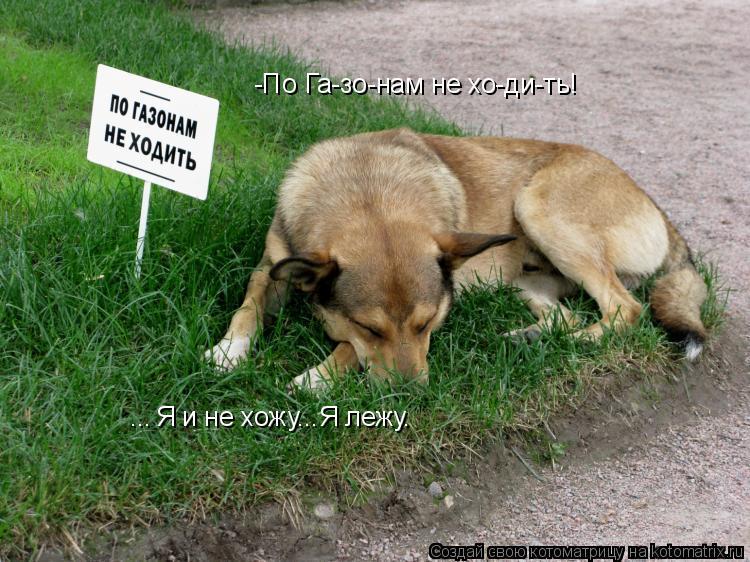 Котоматрица: Я и не хожу...Я лежу. -По Га-зо-нам не хо-ди-ть! ...