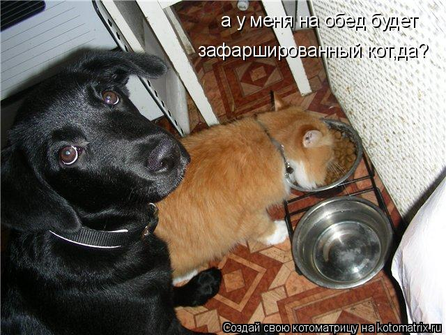 Котоматрица: а у меня на обед будет зафаршированный кот,да?