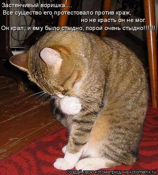 Котоматрица: Застенчивый воришка.... Все существо его протестовало против краж,     но не красть он не мог. Он крал, и ему было стыдно, порой очень стыдно!!!!!!