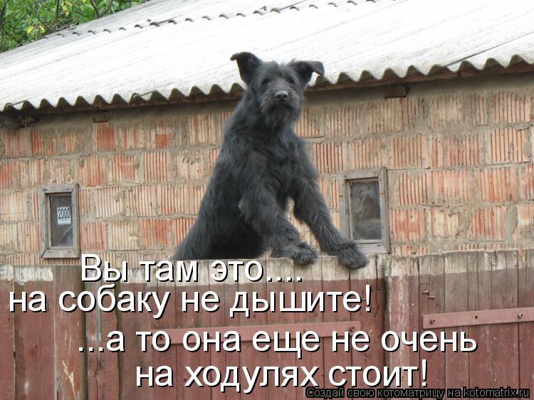 Котоматрица: на собаку не дышите! Вы там это.... ...а то она еще не очень на ходулях стоит!