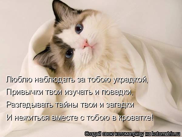 Котоматрица: Люблю наблюдать за тобою украдкой, Привычки твои изучать и повадки, Разгадывать тайны твои и загадки И нежиться вместе с тобою в кроватке!