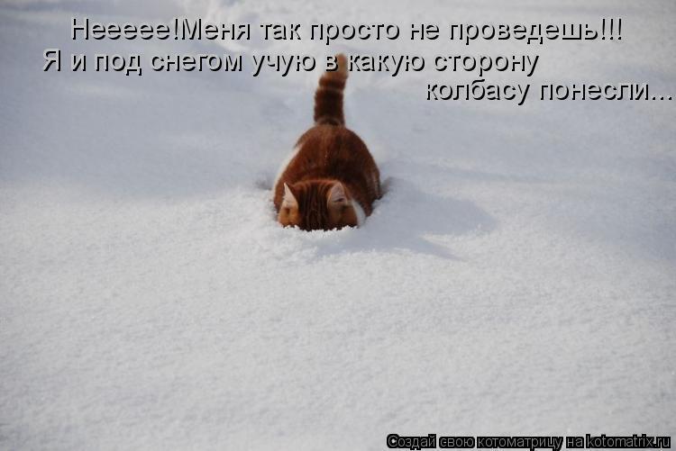 Котоматрица: Неееее!Меня так просто не проведешь!!! Я и под снегом учую в какую сторону  колбасу понесли...