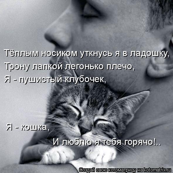 Котоматрица: Тёплым носиком уткнусь я в ладошку, Трону лапкой легонько плечо, Я - пушистый клубочек,  Я - кошка, И люблю я тебя горячо!..