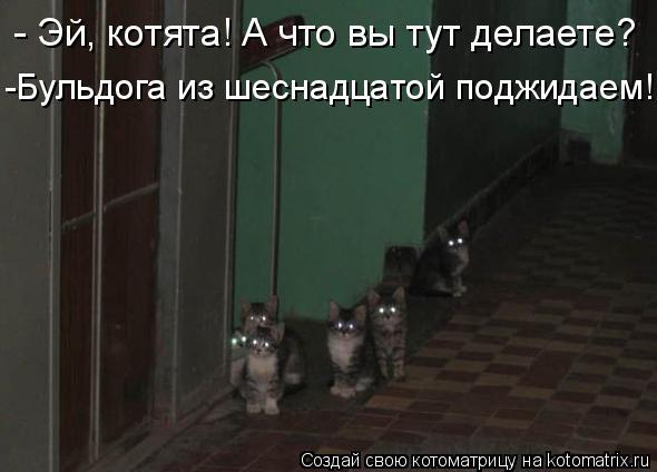 Котоматрица: - Эй, котята! А что вы тут делаете? -Бульдога из шеснадцатой поджидаем!