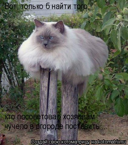Котоматрица: Вот, только б найти того,  кто посоветовал хозяевам чучело в огороде поставить ...