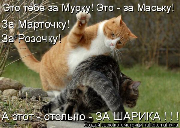 Котоматрица: Это тебе за Мурку! Это - за Маську! А этот - отельно - ЗА ШАРИКА ! ! !  За Марточку! За Розочку!