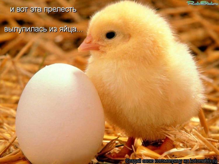 Котоматрица: и вот эта прелесть вылупилась из яйца...