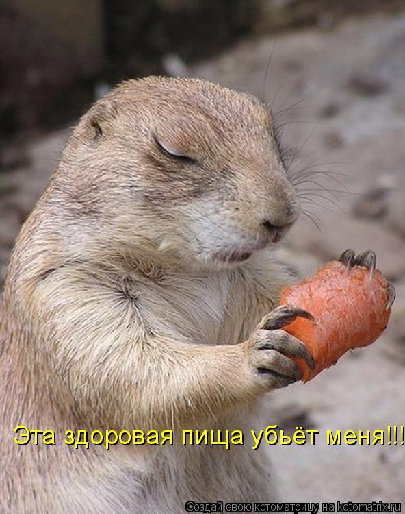 Котоматрица: Эта здоровая пища убьёт меня!!!