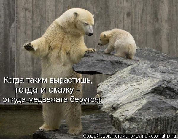 Котоматрица: Когда таким вырастишь,  тогда и скажу -  откуда медвежата берутся!