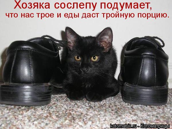 Котоматрица: Хозяка сослепу подумает,  что нас трое и еды даст тройную порцию.
