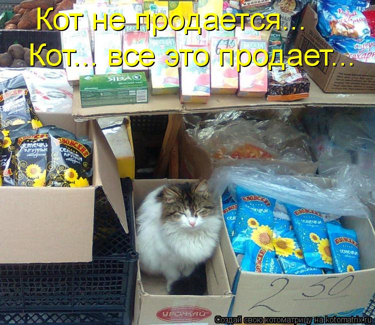 Котоматрица: Кот не продается... Кот... все это продает...
