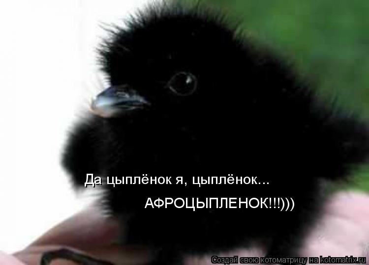 Котоматрица: Да цыплёнок я, цыплёнок... АФРОЦЫПЛЕНОК!!!)))