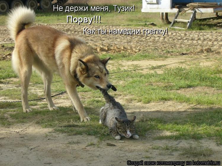 Котоматрица: Не держи меня, Тузик! Как ты намедни грелку! Порву!!!