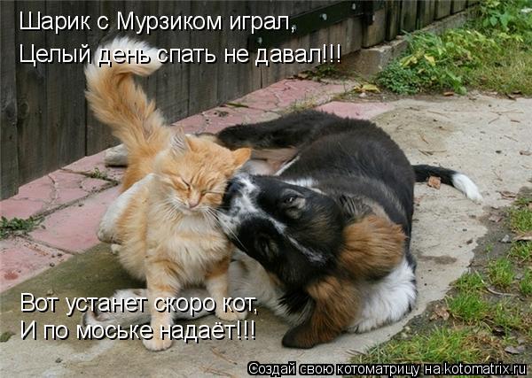 Котоматрица: Шарик с Мурзиком играл, Целый день спать не давал!!! Вот устанет скоро кот, И по моське надаёт!!!