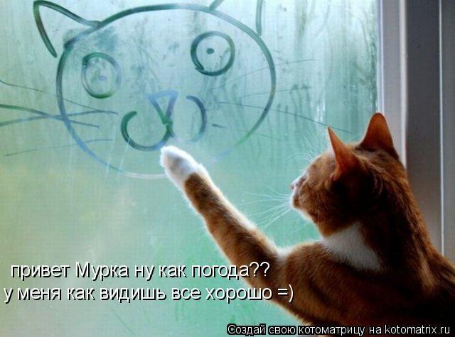 Котоматрица: привет Мурка ну как погода?? у меня как видишь все хорошо =)