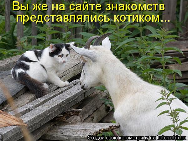 Котоматрица: Вы же на сайте знакомств  представлялись котиком...