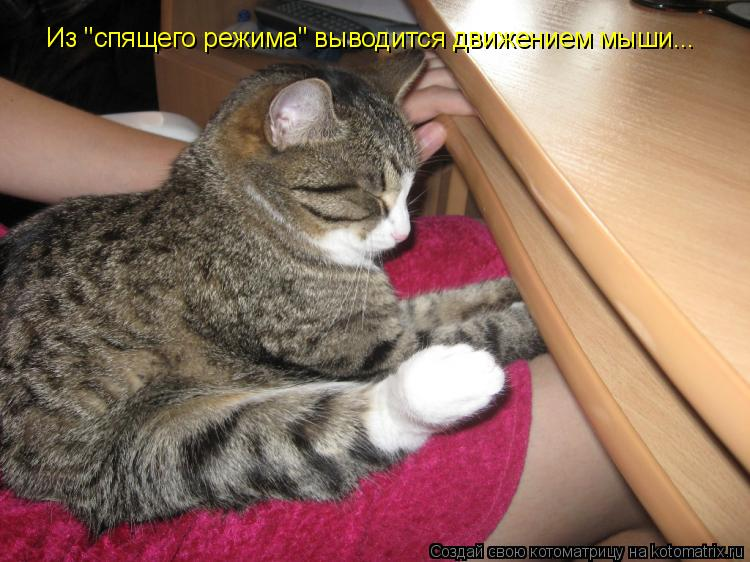 """Котоматрица: Из """"спящего режима"""" выводится движением мыши..."""