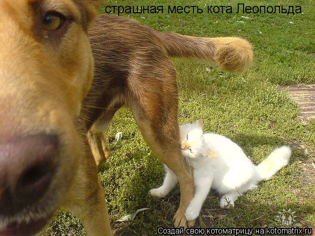 Котоматрица: страшная месть кота Леопольда