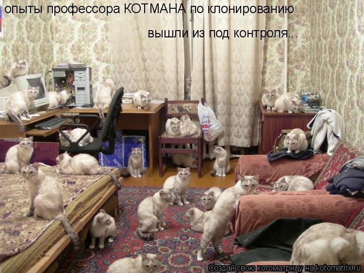 Котоматрица: опыты профессора КОТМАНА по клонированию вышли из под контроля...