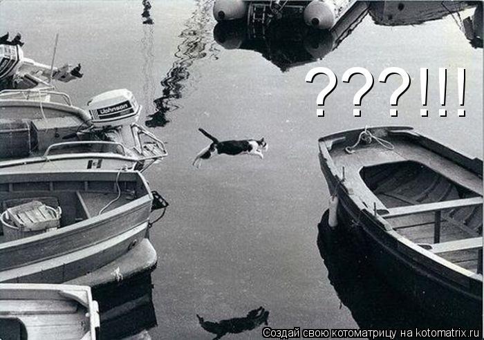 Котоматрица: ???!!!