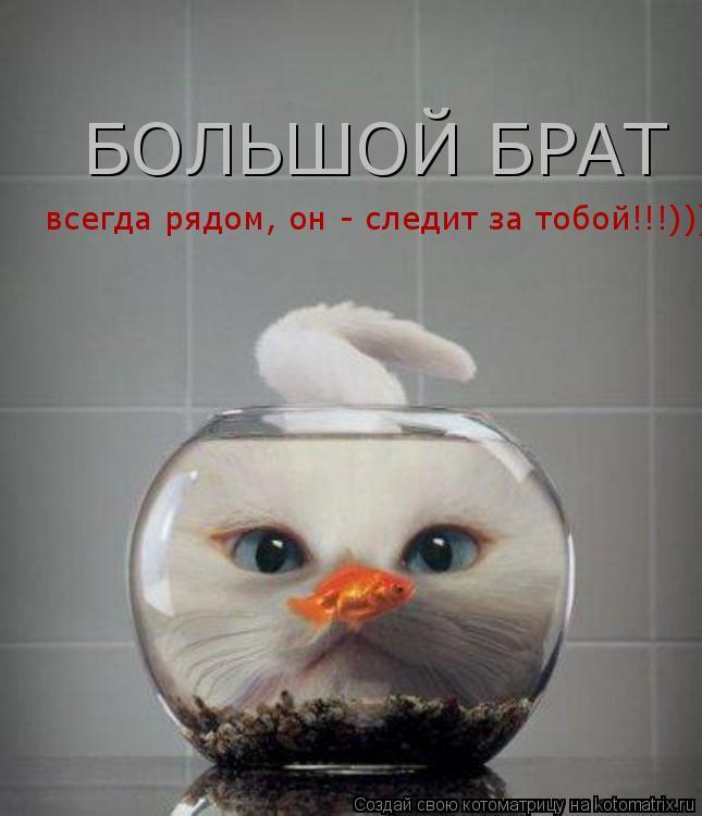 Котоматрица: БОЛЬШОЙ БРАТ всегда рядом, он - следит за тобой!!!)))