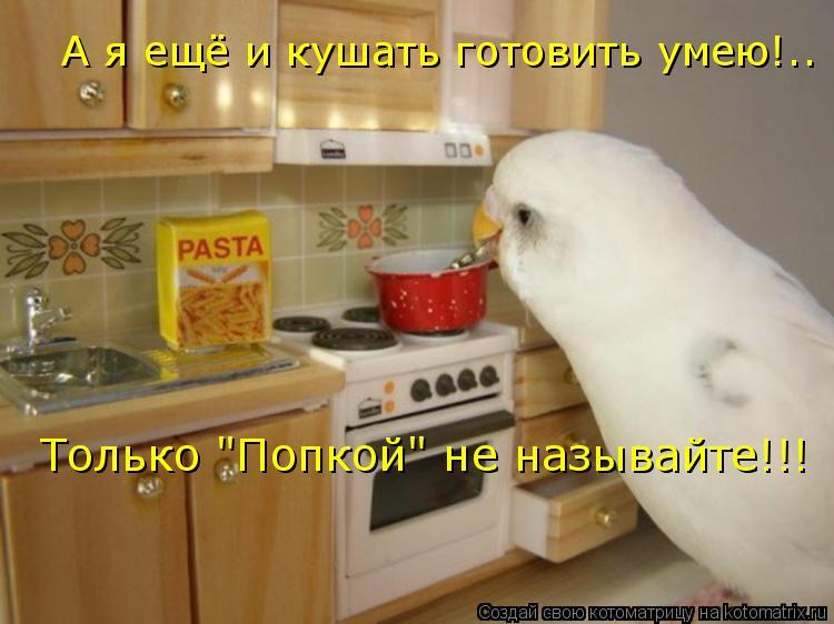 """Котоматрица: А я ещё и кушать готовить умею!.. Только """"Попкой"""" не называйте!!!"""