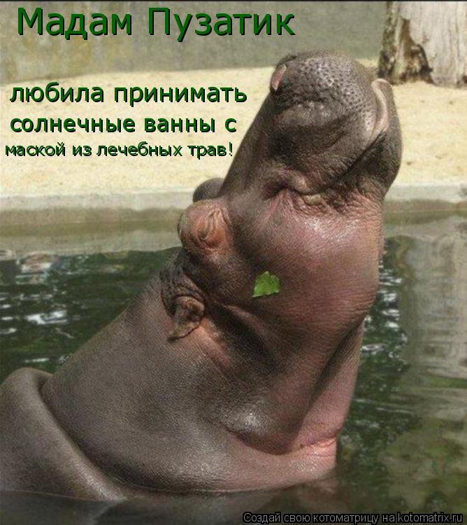 Котоматрица: Мадам Пузатик любила принимать солнечные ванны с  маской из лечебных трав!