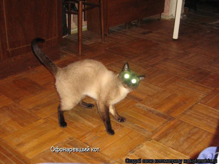 Котоматрица: Офонаревший кот