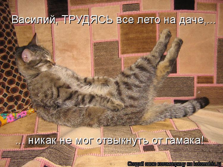 Котоматрица: Василий, ТРУДЯСЬ все лето на даче,... ... никак не мог отвыкнуть от гамака!