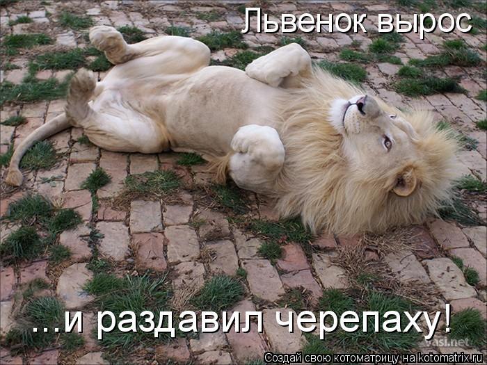 Котоматрица: Львенок вырос ...и раздавил черепаху!