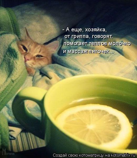 Котоматрица: - А еще, хозяйка, от гриппа, говорят, помогает теплое молочко и массаж пяточек...
