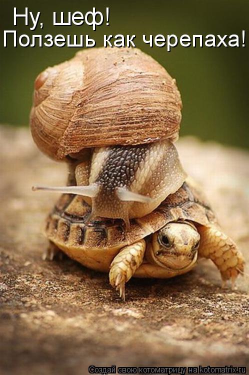 Котоматрица: Ну, шеф! Ползешь как черепаха!