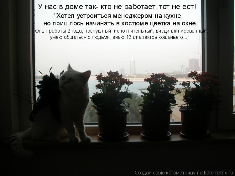 """Котоматрица: У нас в доме так- кто не работает, тот не ест!  -""""Хотел устроиться менеджером на кухне,  но пришлось начинать в костюме цветка на окне.  Опыт раб"""