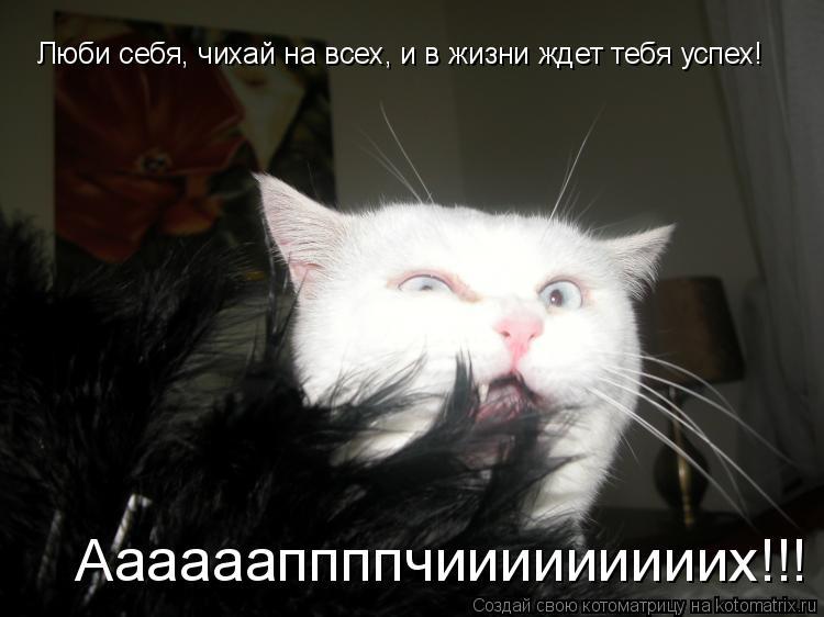 Котоматрица: Люби себя, чихай на всех, и в жизни ждет тебя успех!  Ааааааппппчииииииииих!!!