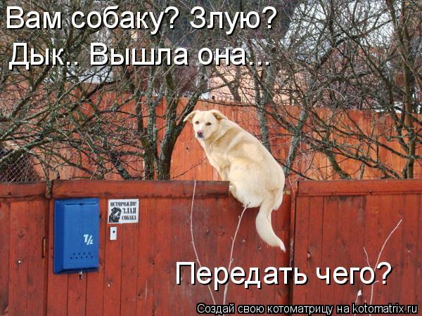 Котоматрица: Вам собаку? Злую? Дык.. Вышла она... Передать чего?