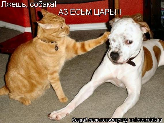 Котоматрица: Лжешь, собака! АЗ ЕСЬМ ЦАРЬ!!!