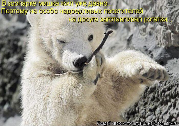 Котоматрица: В зоопарке мишка жил уже давно... Поэтому на особо надоедливых посетителей  на досуге заготавливал рогатки...